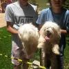 Cães encontrados